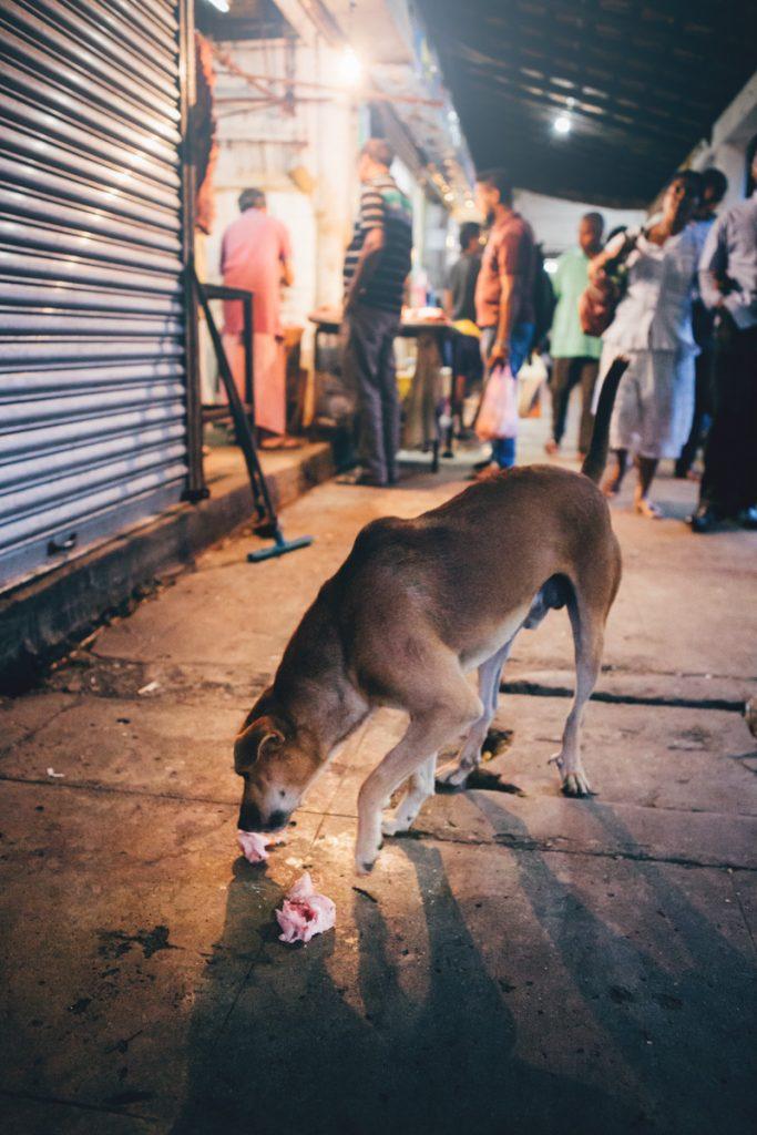 Sri Lanka chien sur le marché de Kandy