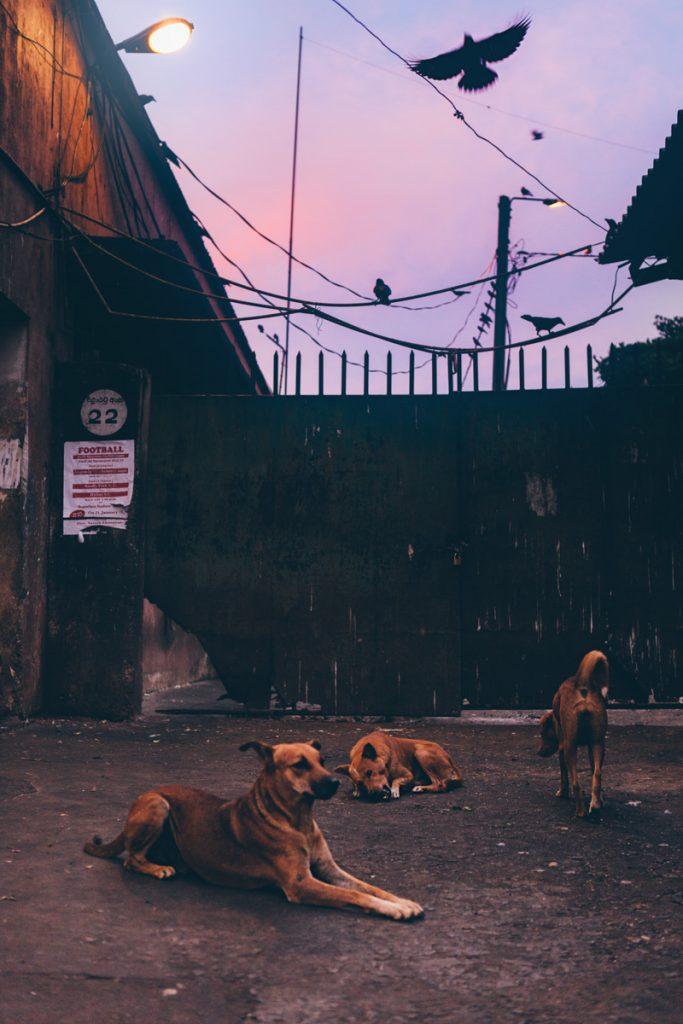 Sri Lanka sur le marché de Kandy