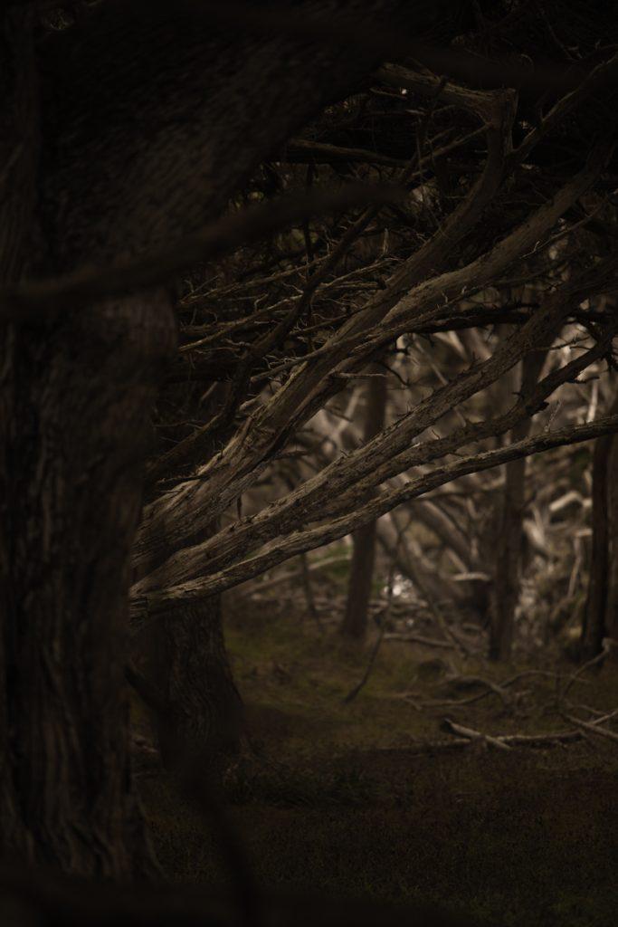 USA : Point Lobos