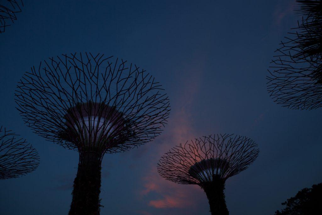 Singapour jardin