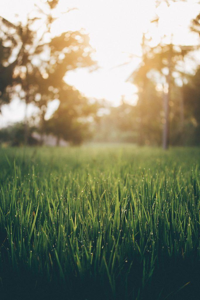 bali rizière soleil après pluie