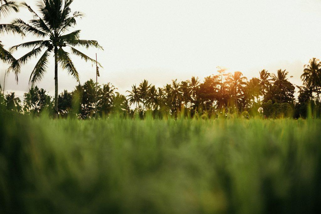 bali insolite paysage autour de ubud