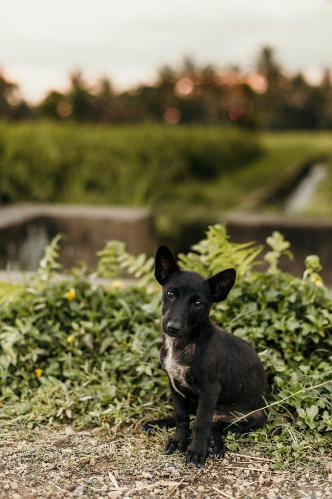 visiter Bali petit chien