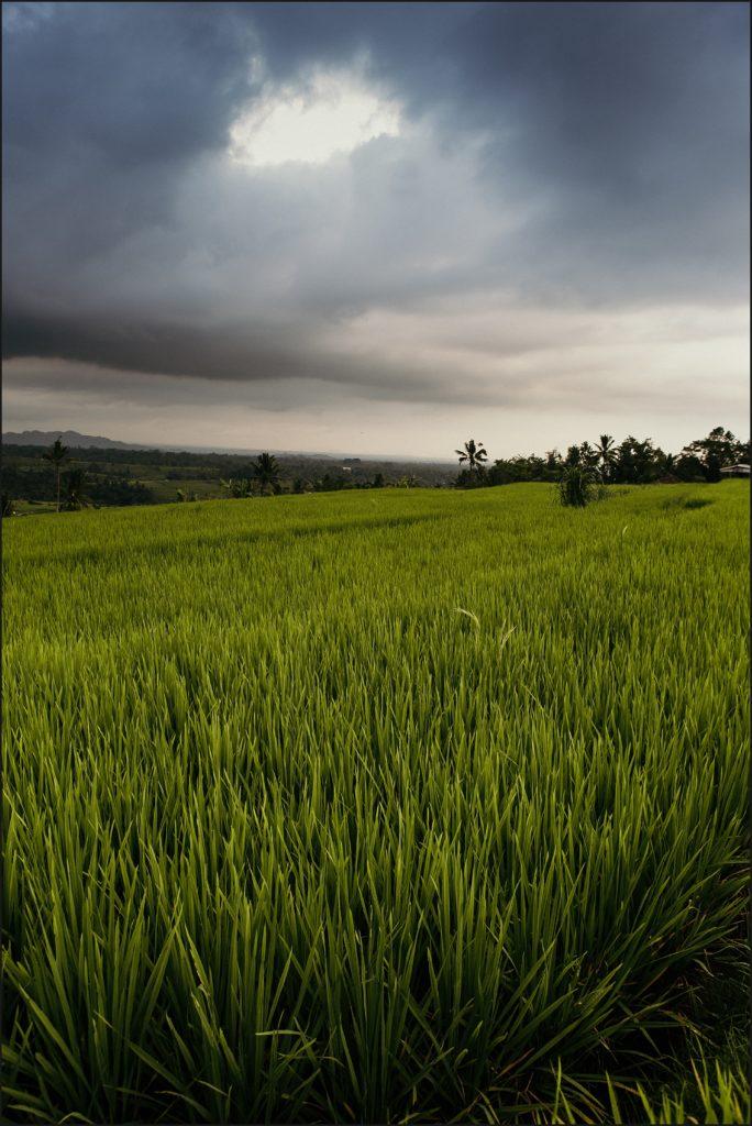 visiter bali rizières de jatiluwih