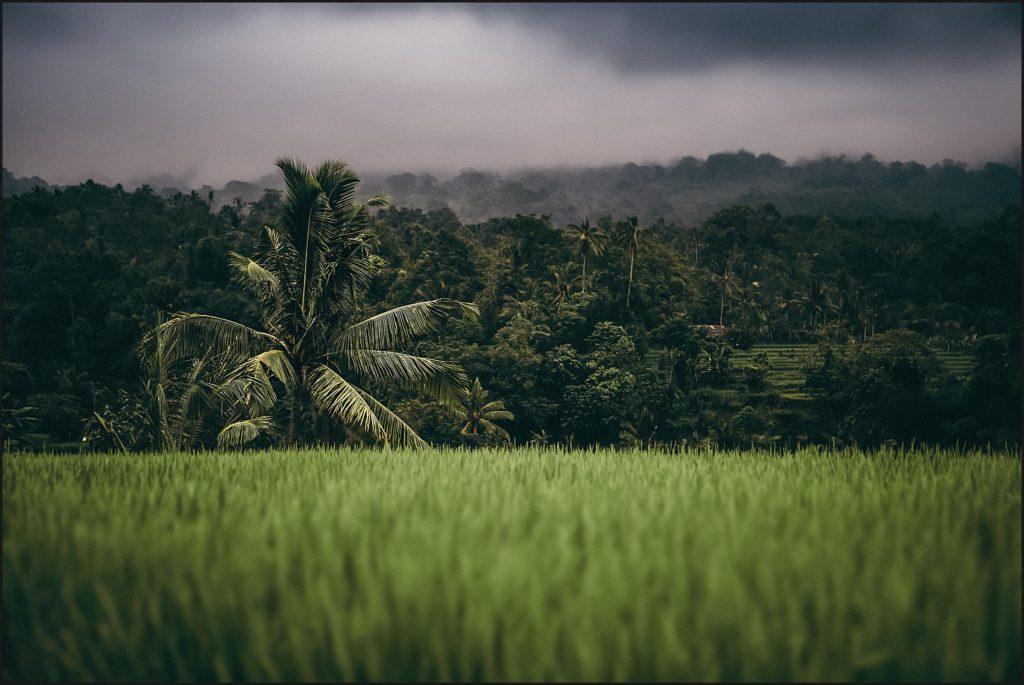 bali insolite rizières de jatiluwih unesco