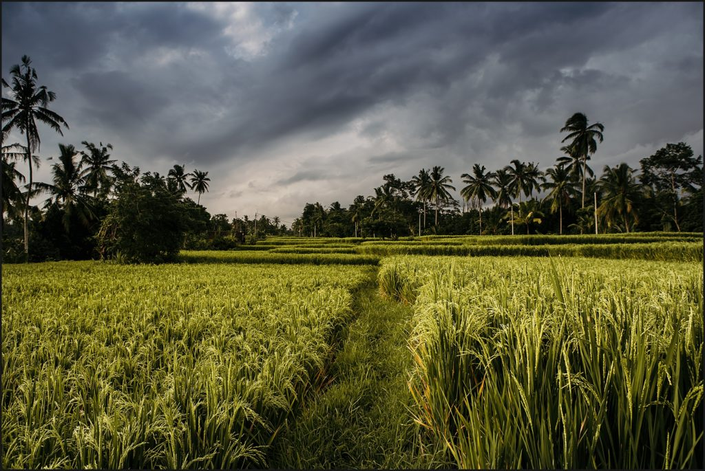 bali insolite rizières ubud
