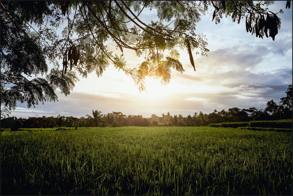 bali insolite coucher soleil ubud