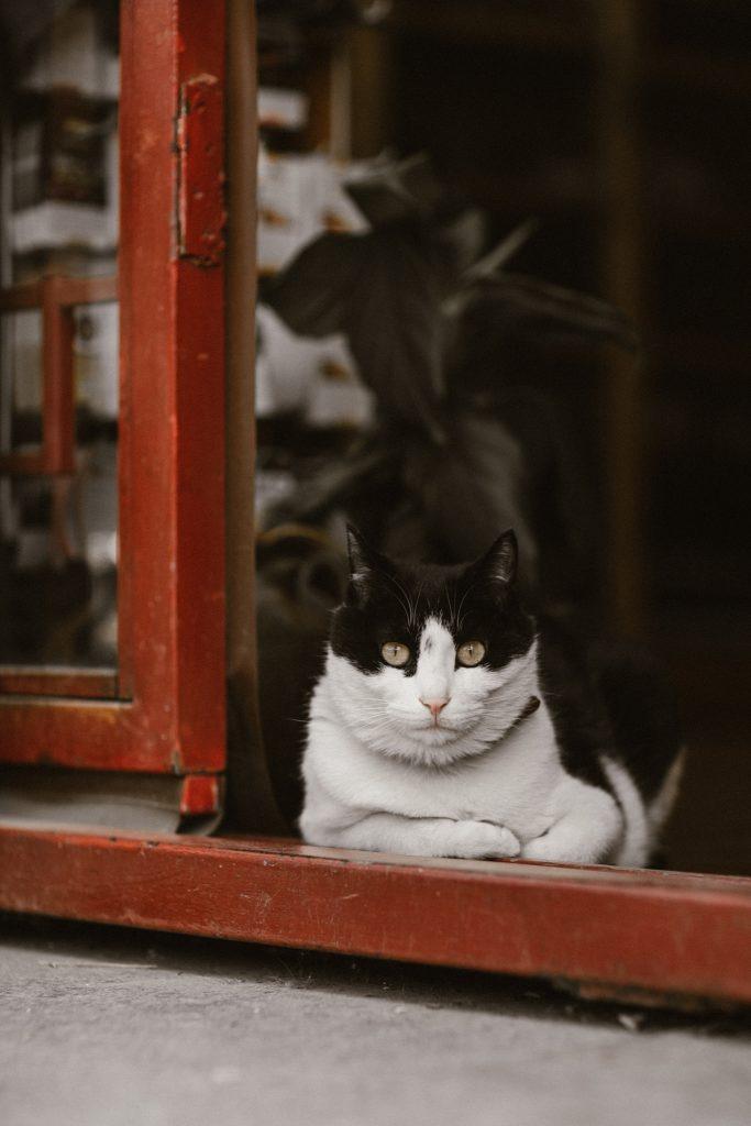 visiter pekin chat dans la rue