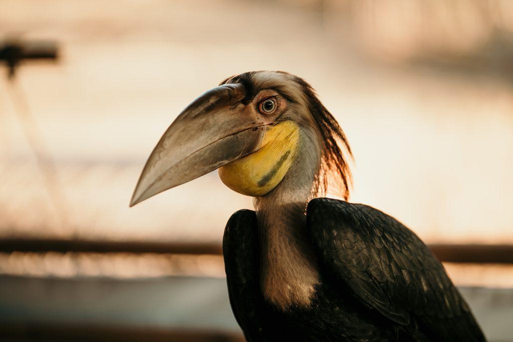 la boucle de thakhek oiseau laos