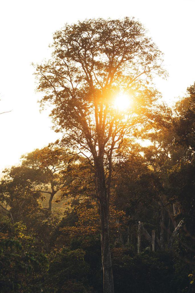 la boucle de thakhek arbre laos