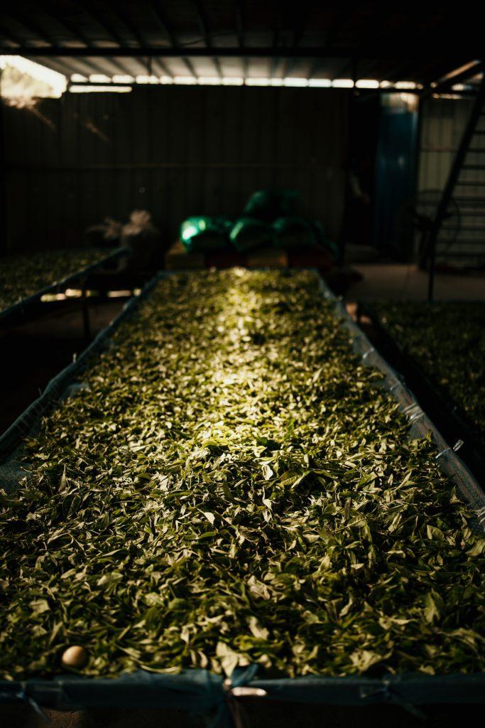 trek au laos fabrique de thé phongsali