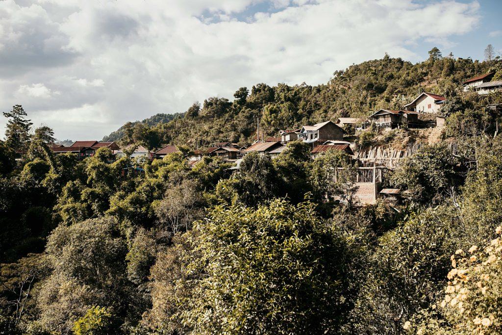 Visiter Phongsali et ses environs tea plantations