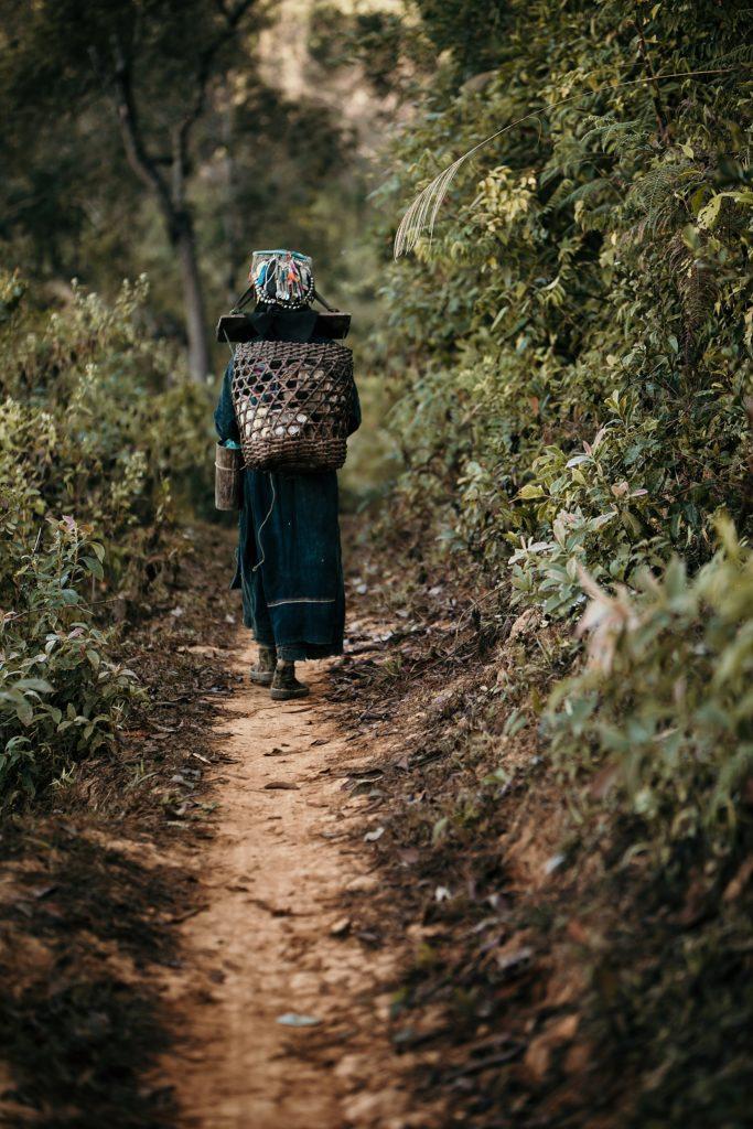 Trek au Laos chez les Akha ramasseuse de bois
