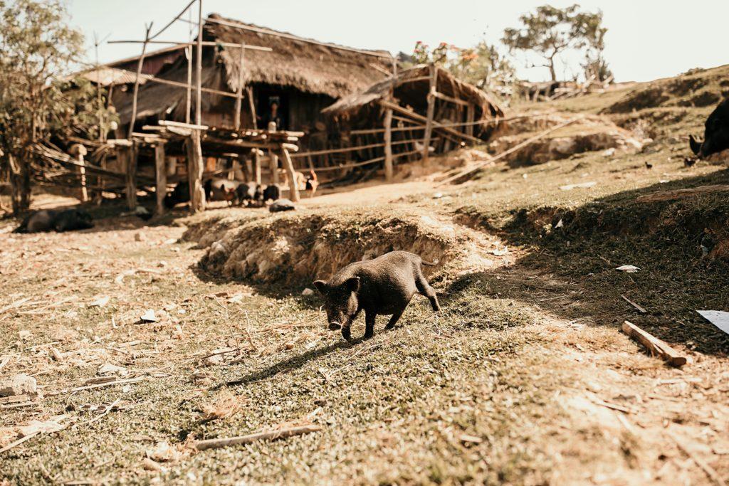 Trek au Laos chez les Akha Peryenxang Kao Village house