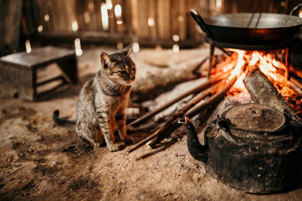 Trek au Laos chez les Akha chat du village