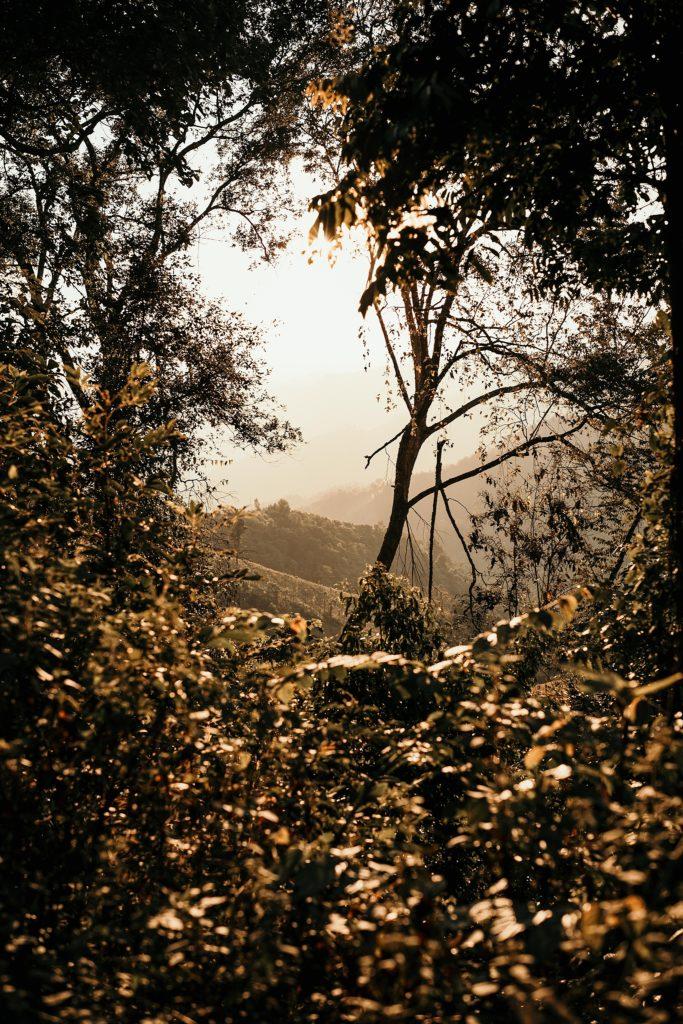 Trek au Laos chez les Akha coucher soleil arbre